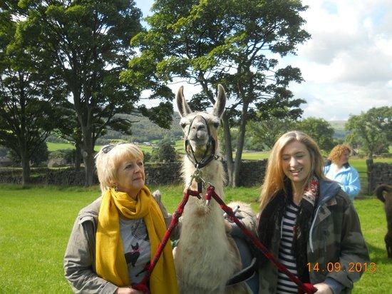 Nidderdale Llamas: With our Llama Morgan