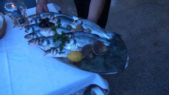 Evergreen : Der Fisch, exzellent und frisch