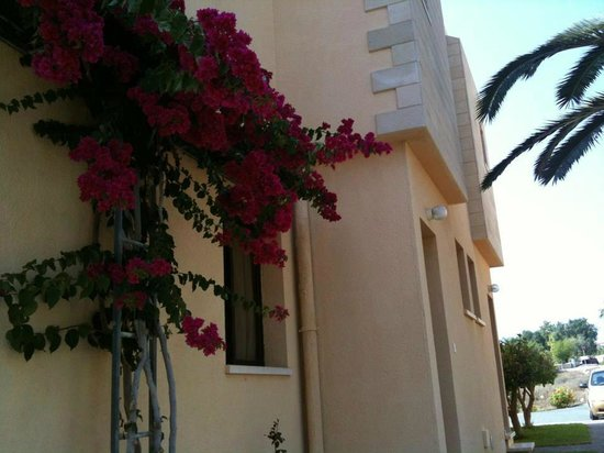 Dimma Seaside Houses: Wonderful Gardens