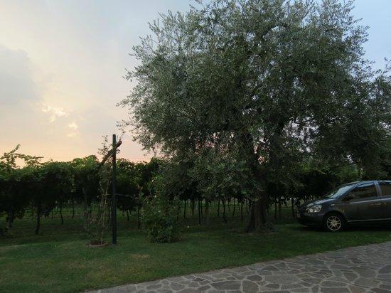 B&B Bianconiglio: Garden