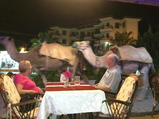 Crown restaurant: camels