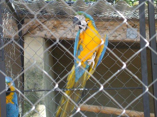 Rocher des Aigles : Un perroquet Ara