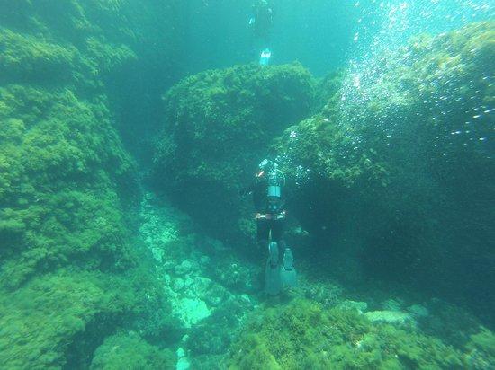 Aquatica: diving