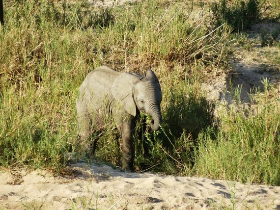 Leopard Hills Private Game Reserve: Baby Elephant