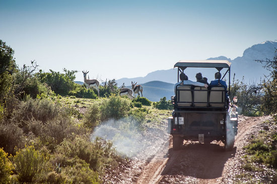 Buffelsdrift Game Lodge - Activities