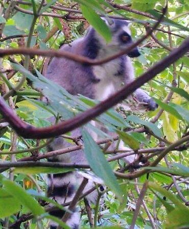 Paignton Zoo Environmental Park: The Lemur Enclosure.