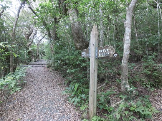 Amami Nature Observation Forest : 分かれ道