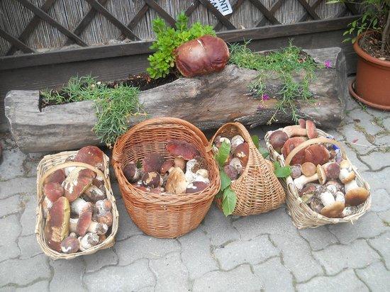 Bardineto, Italia: Funghi