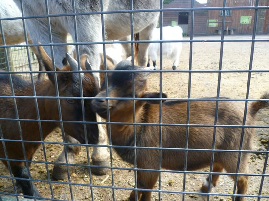 Zoo de Jurques - Farm