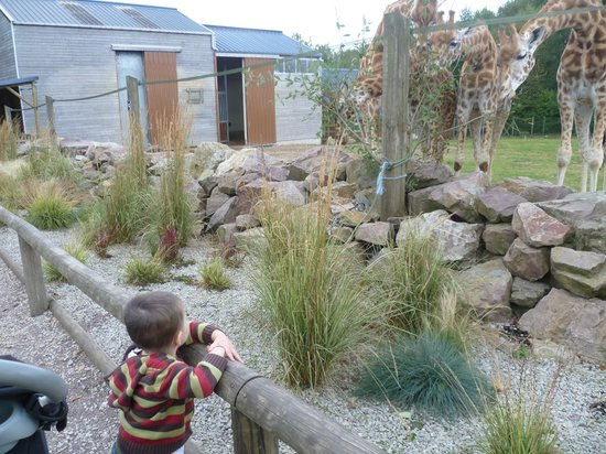 Zoo de Jurques - Giraffes