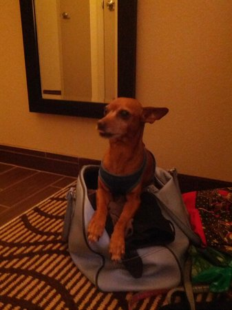 La Quinta Inn & Suites Bonita Springs Naples North: Our dog Max doesn't want us to leave him alone