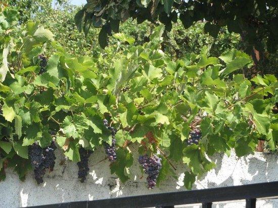 Stevalia Hotel & Spa : chaud ces raisins,,,