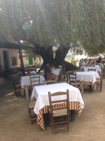 Restaurante Toruno: una comida agradable