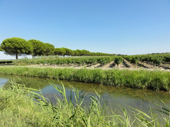 Camargue autrement safari 4x4 : Le vin de sable