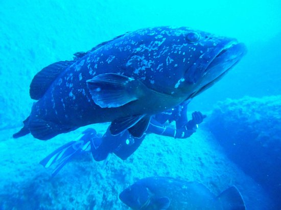 A truly beautiful experience picture of blu dive center santa teresa gallura tripadvisor - Dive center blu ...