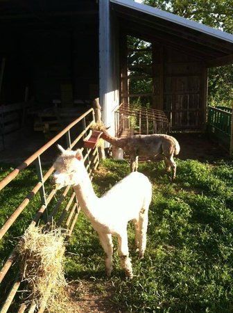 Sha-Bock Farm Bed and Breakfast