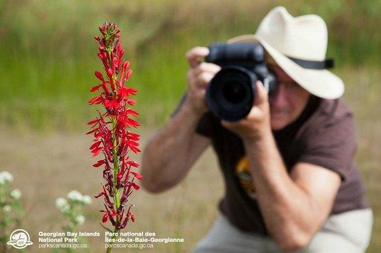 cardinal flower makes for a perfect photo georgian bay islands