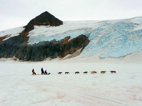 Alaska Icefield Expeditions : Dog sledding on the Glacier
