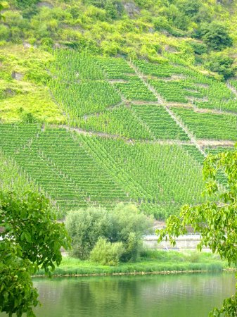 Haus Schwarzenberg : View across the Mosel to grape vine covered hillside