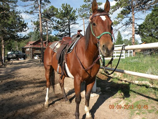 Sombrero Ranch: Good Horse Stock