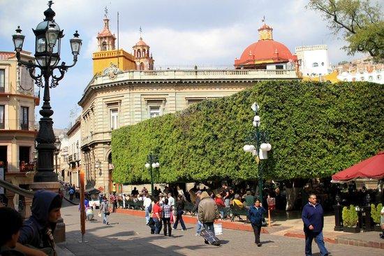 El Jardin De La Union Picture Of Jardin De La Union Guanajuato Tripadvisor