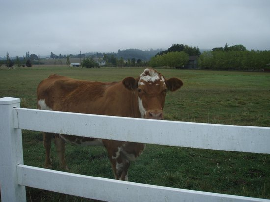 Hopewell Bed & Breakfast: MOO COW