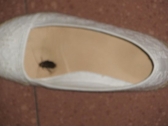Catalonia Park Guell: Cafard dans ma chaussure! Bonne surprise du matin!!!