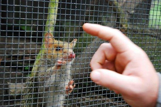 Daintree Wild Bed and Breakfast: A friendly fella