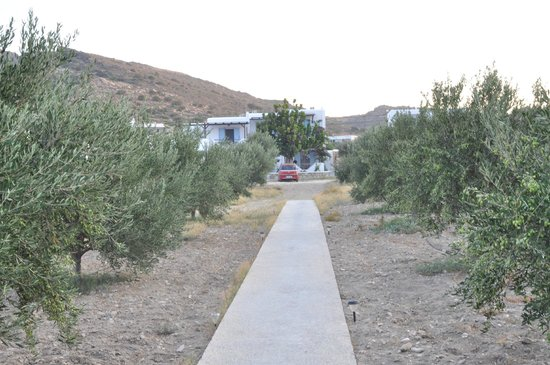 Venus Hotel: ο κήπος-parking