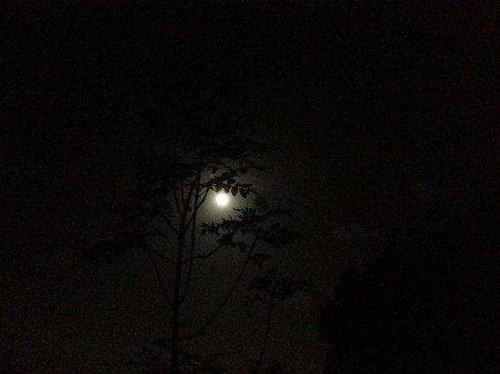 The Farm Camp : Moonlight at camp