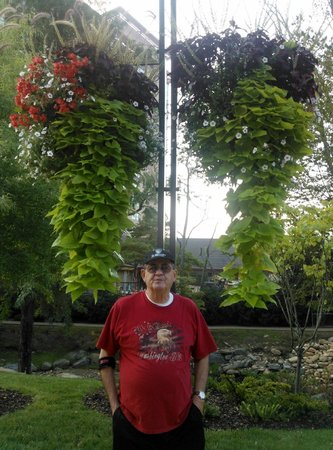 Harrah's Cherokee Hotel: Beautiful hanging baskets