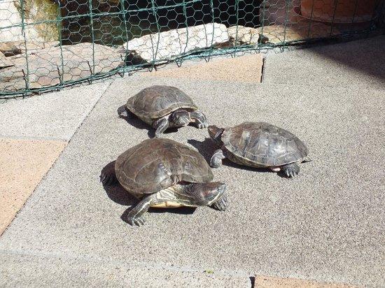Hotel Majolika : turtles