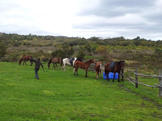 Farm 215 Nature Retreat & Fynbos Reserve: Getting the horses ready