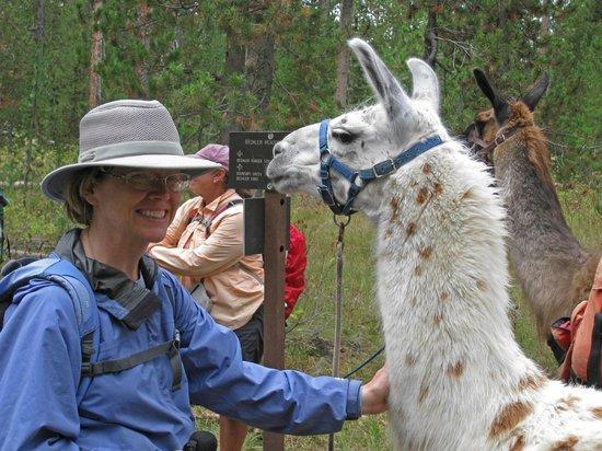 Jackson Hole Llamas: Jo & Lucy, the llama she led.
