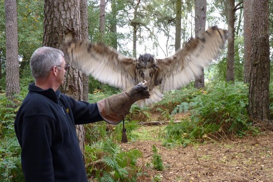 Forest Falconry: My husband with one of the Owls