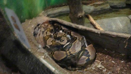 Seneca Park Zoo: Snake
