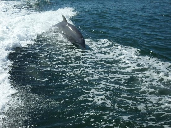 Thundercat Dolphin Watch: Just one pic!