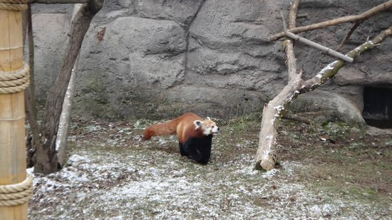 Seneca Park Zoo: Red Panda