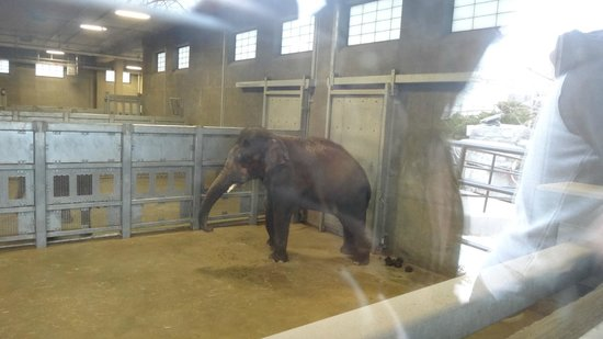 Seneca Park Zoo: Elephants