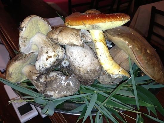 I Corbezzolo: funghi porcini freschi