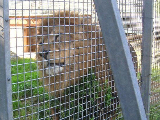 Newquay Zoo: Magnificent creature_but move if he presents his backside to the cage bars!!