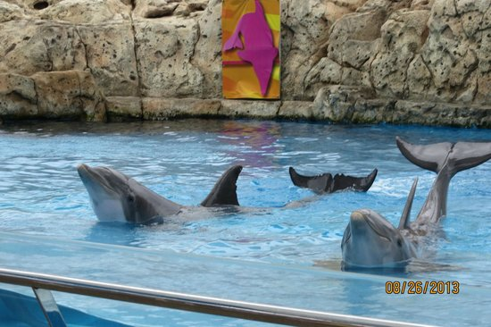Texas State Aquarium : Dolphins showing off before their show