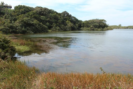 Meio Lake: Vista da trilha