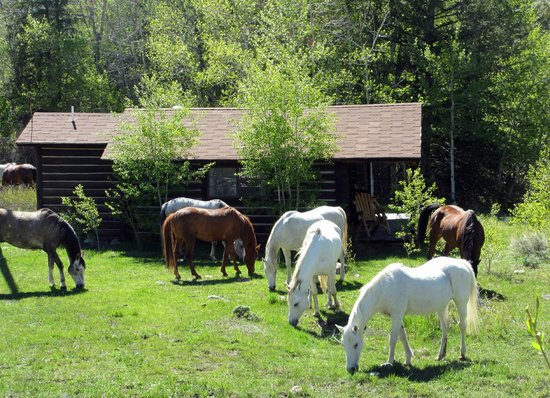 Bitterroot Ranch: a few horses grazing outside one of the cabins