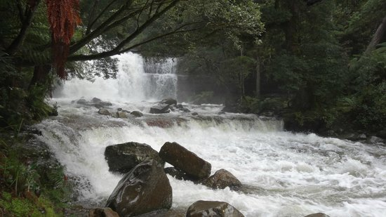 Liffey Falls: Falls - 1 of 3