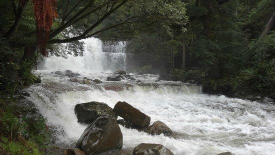 Liffey Falls : Falls - 1 of 3