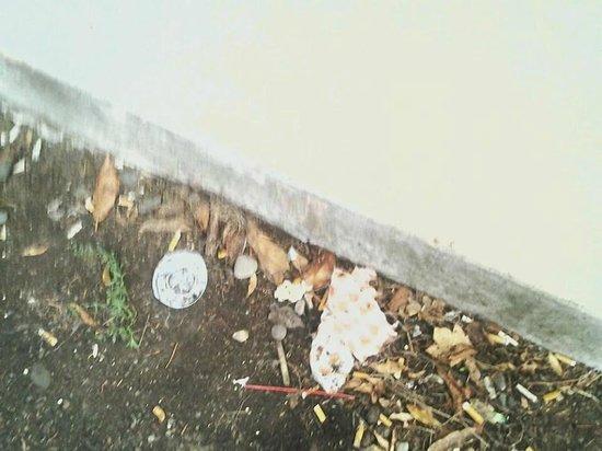 Red Roof Inn Portland : trash around motel