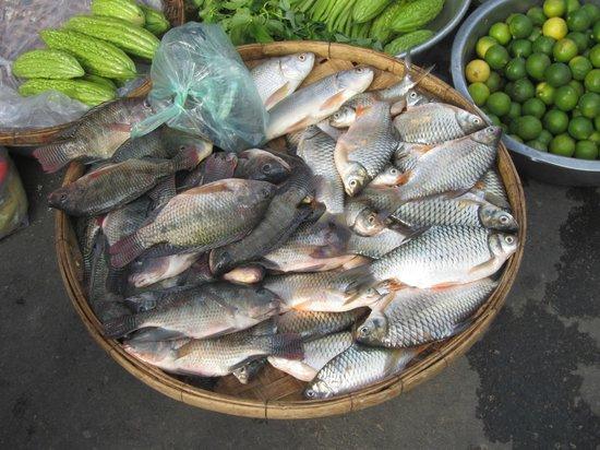Pesci di fiume foto di russian market phnom penh for Pesci di fiume