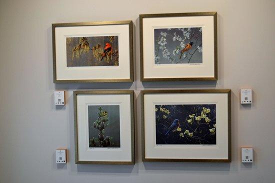 Robert Bateman Centre: Robert Bateman Center Gallery of Birds even featured bird calls