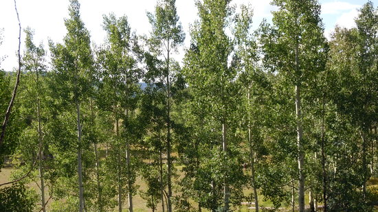 Kaibab National Forest: View from Kaibab Lodge